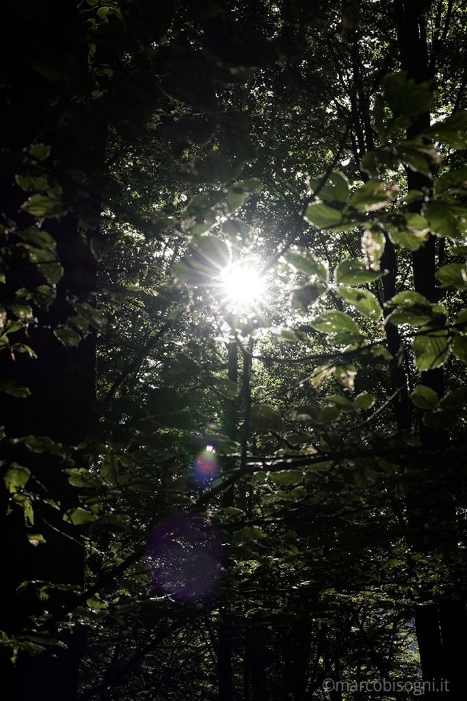 Viltrox 33 mm f1.4 ghosting sunstar